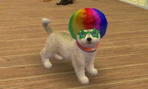 dogs0725.jpg