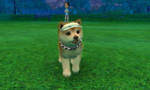 dogs0732.jpg