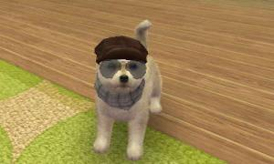 dogs0734.jpg