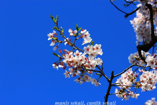 cantik11_20120416000301.jpg