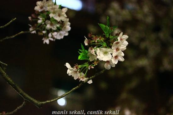 cantik8_20120416000300.jpg