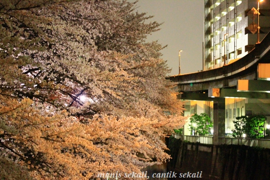 cantik9_20120407174219.jpg