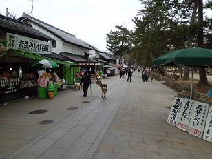 奈良公園-07b