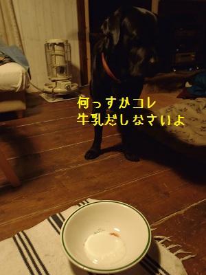 b20111114-PB140186.jpg
