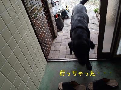 b20111117-PB170032.jpg