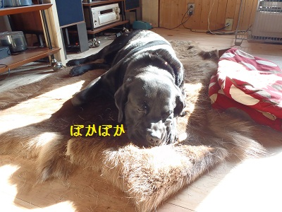 b20111128-PB280138.jpg
