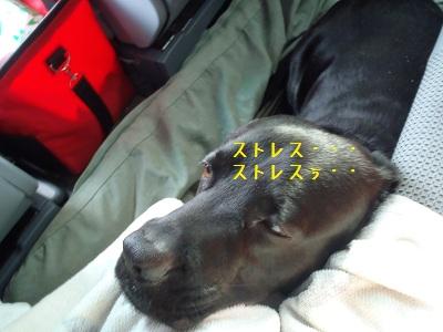 b20111227-PC270117.jpg