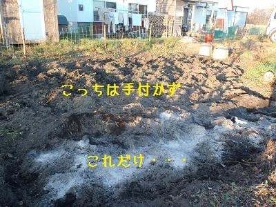 bb20111108-PB080291.jpg