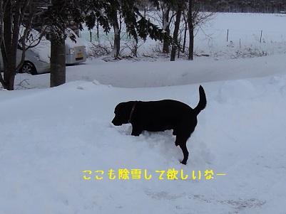 bb20111223-DSCN0353.jpg