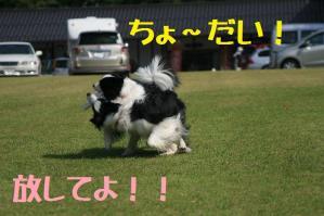 20110812_003mt.jpg
