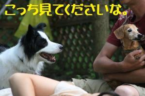 20110812_013mt.jpg