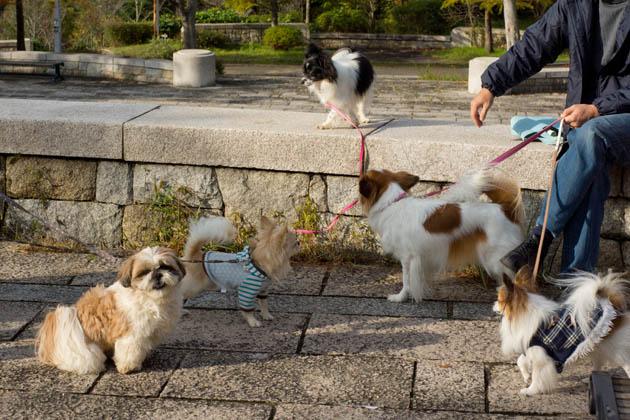お散歩日記(11月20日(その2))-008