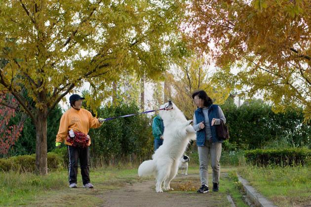 お散歩日記(11月20日(その4))-001