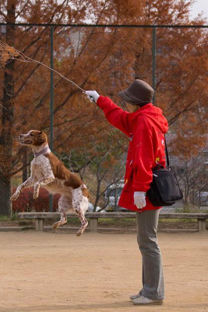 お散歩日記(12月6日(その1))-013