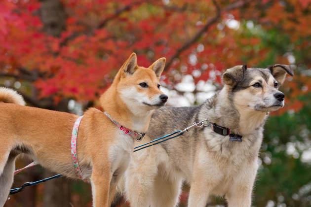 お散歩日記(12月6日(その2))-007