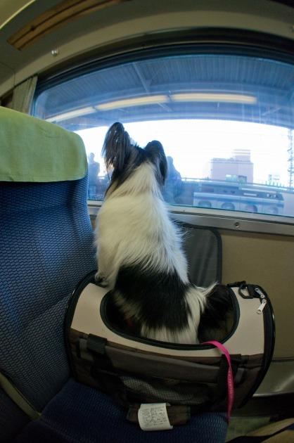 電車でGO! ~南紀白浜~-003