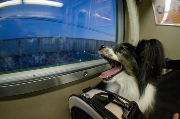 電車でGO! ~南紀白浜~-009