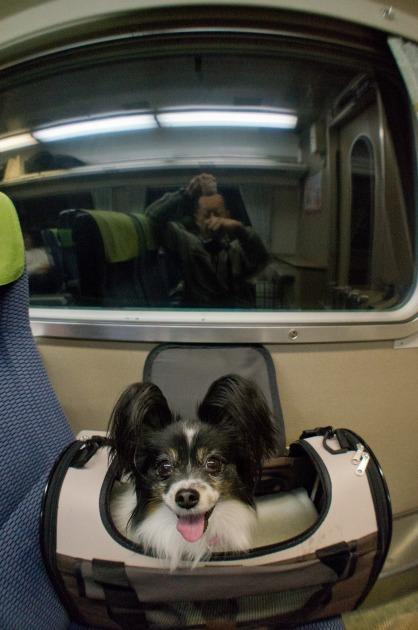 電車でGO! ~南紀白浜~-012