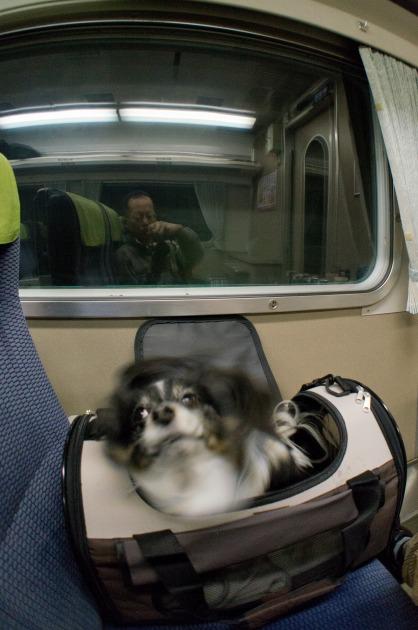 電車でGO! ~南紀白浜~-013