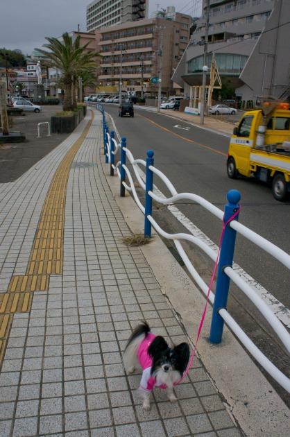 元日の朝散歩 ~南紀白浜~-002