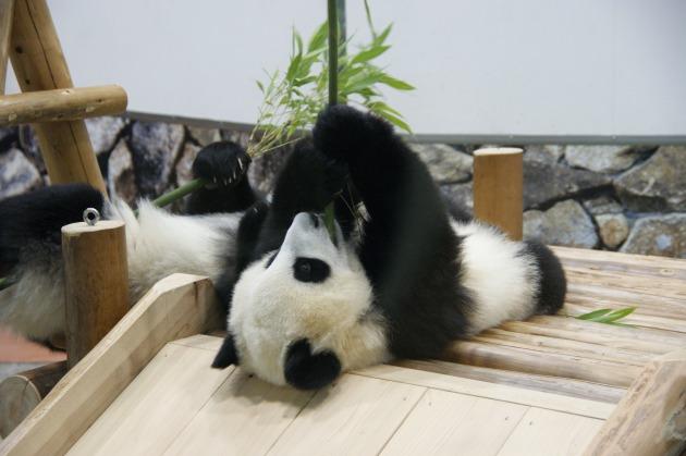 パンダ012