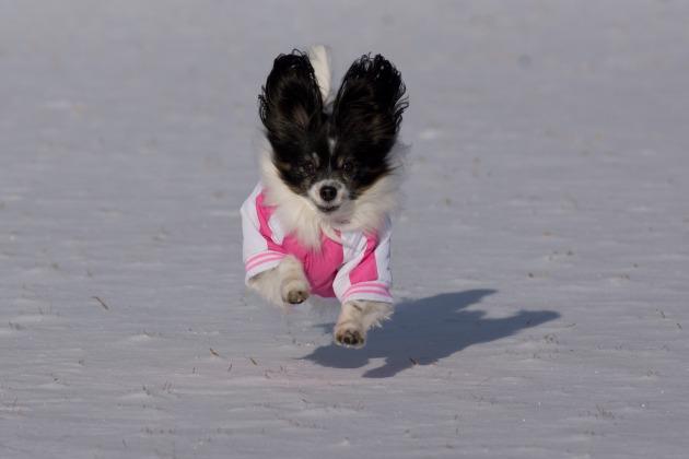 雪が積もった!~飛行犬編~-001