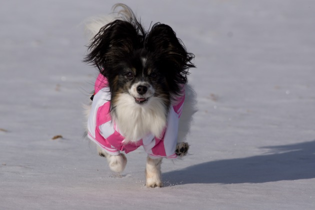 雪が積もった!~飛行犬編~-003