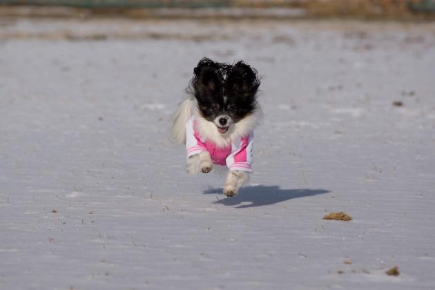 雪が積もった!~飛行犬編~-005