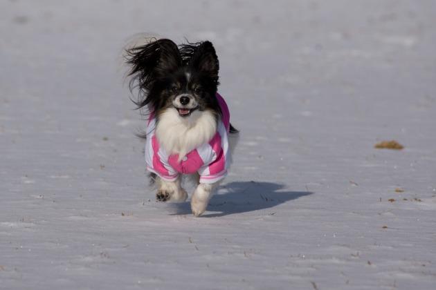 雪が積もった!~飛行犬編~-009