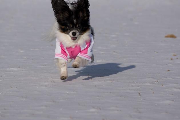 雪が積もった!~飛行犬編~-010