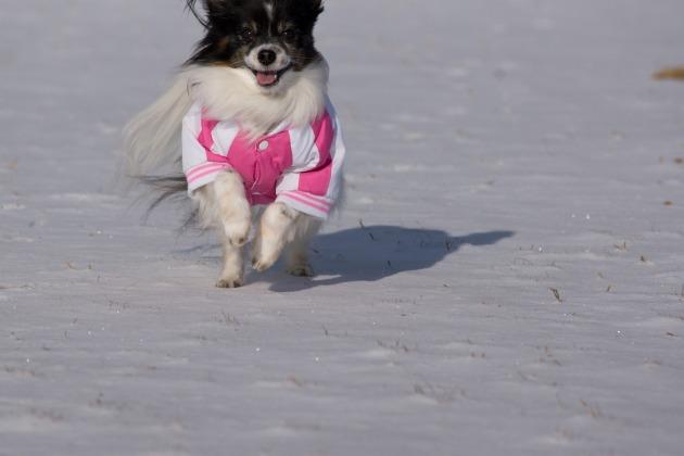 雪が積もった!~飛行犬編~-011
