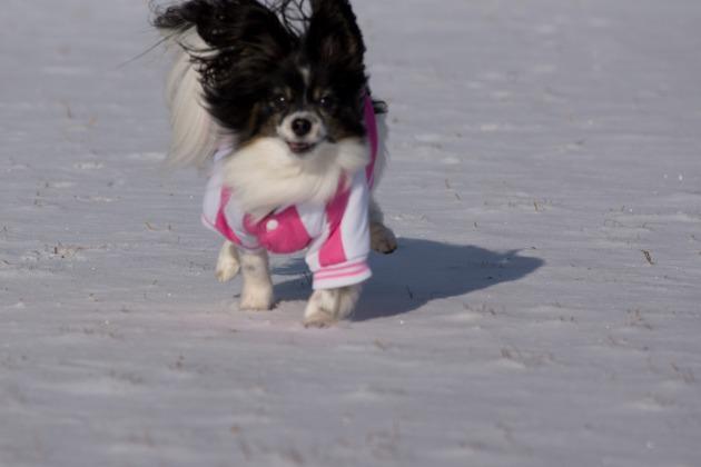 雪が積もった!~飛行犬編~-012