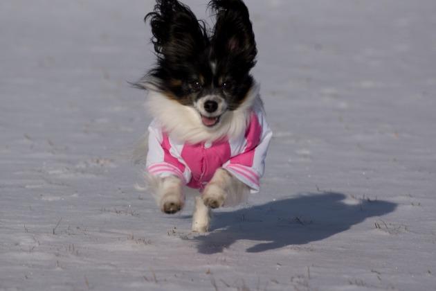 雪が積もった!~飛行犬編~-013