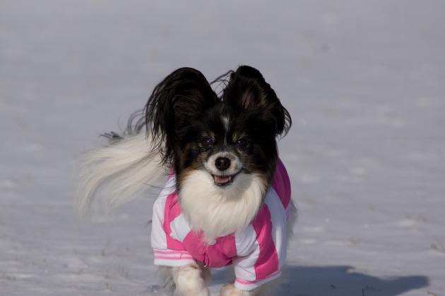 雪が積もった!~飛行犬編~-014