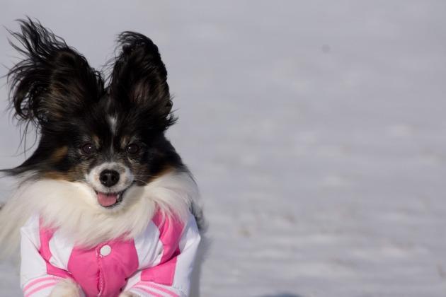 雪が積もった!~飛行犬編~-016
