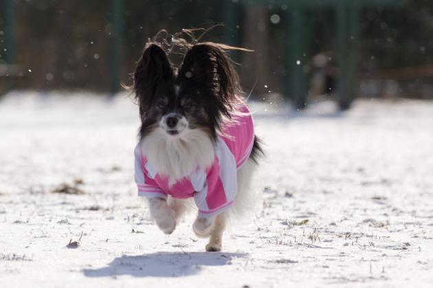 雪が積もった!~飛行犬編~-017