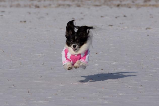 雪が積もった!~飛行犬編~-021