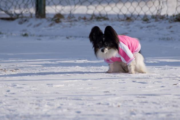雪が積もった!~飛行犬編~-022