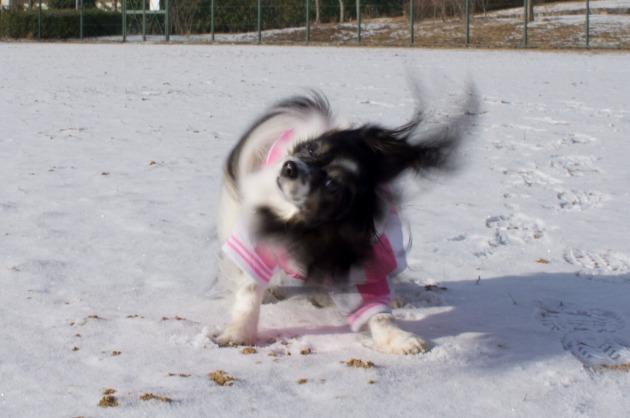 雪が積もった!~飛行犬編~-023