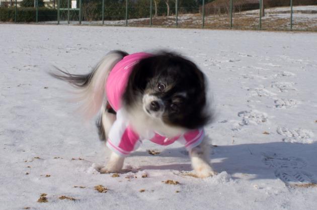 雪が積もった!~飛行犬編~-024