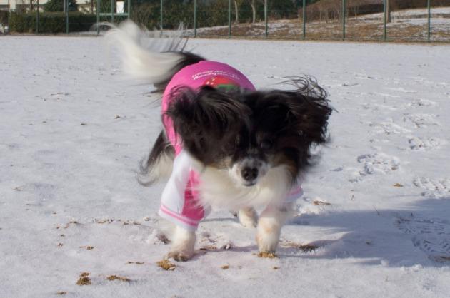雪が積もった!~飛行犬編~-025