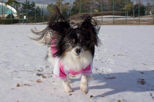 雪が積もった!~飛行犬編~-026