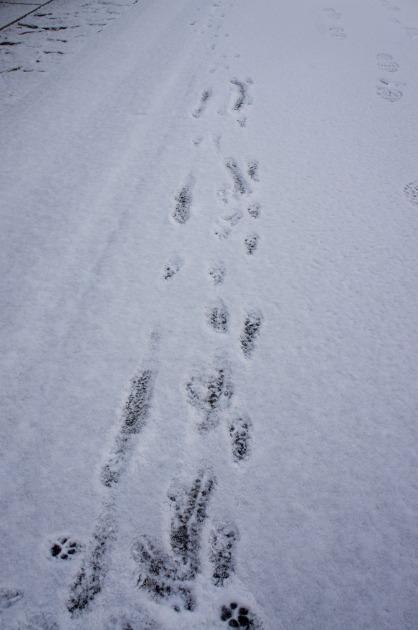 雪が積もった!~お友達編~-003