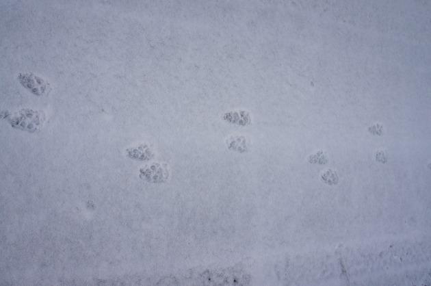 雪が積もった!~お友達編~-004