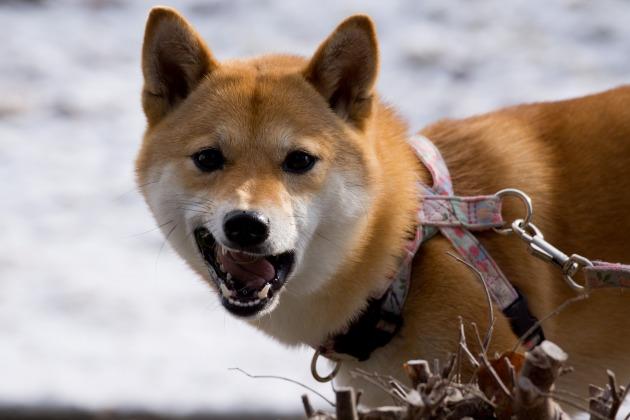 雪が積もった!~お友達編~-011