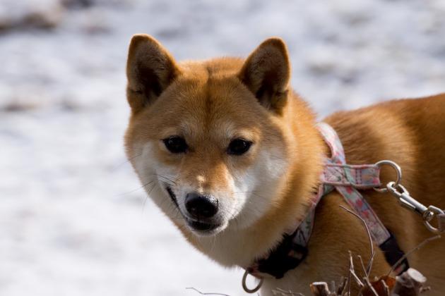 雪が積もった!~お友達編~-012