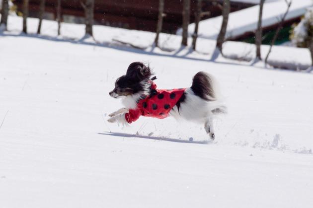 雪原で大暴れ!-003