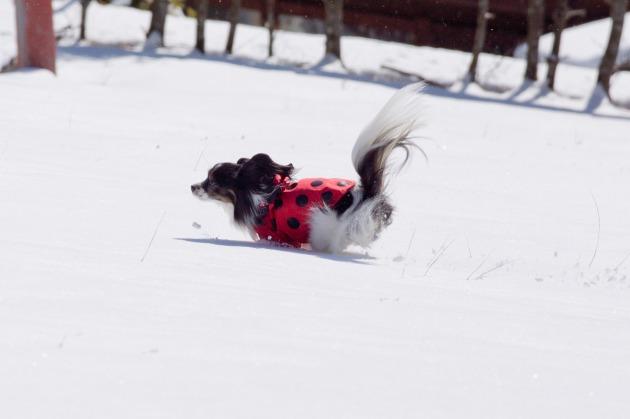 雪原で大暴れ!-004