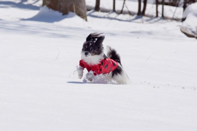 雪原で大暴れ!-005