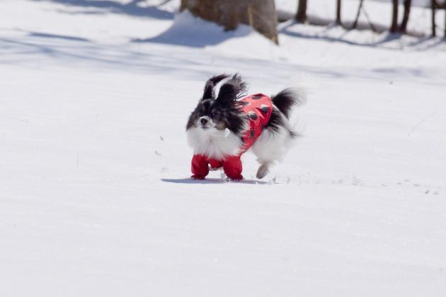 雪原で大暴れ!-006
